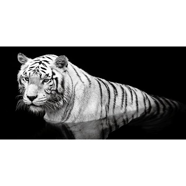 TIGRE in ACQUA - Модерен фото принт