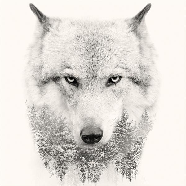 WHITE WOLF - Модерен фото принт