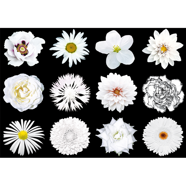 WHITE FLOWERS - Дизайнерска фото принт картина